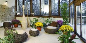 Зеленый спецназ: <b>10</b> самых неприхотливых комнатных растений для квартиры