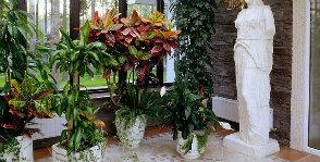 6 вопросов о пестролистных растениях