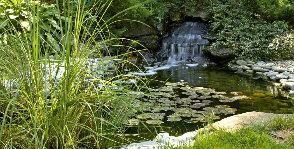 <strong>10</strong> вопросов про водоем в саду
