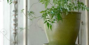 3 домашних растения, которые помогают лучше спать