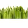Grass - на 360.ru: цены, описание, характеристики, где купить в Москве.