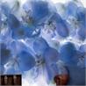 Blossom P140502-W - на 360.ru: цены, описание, характеристики, где купить в Москве.