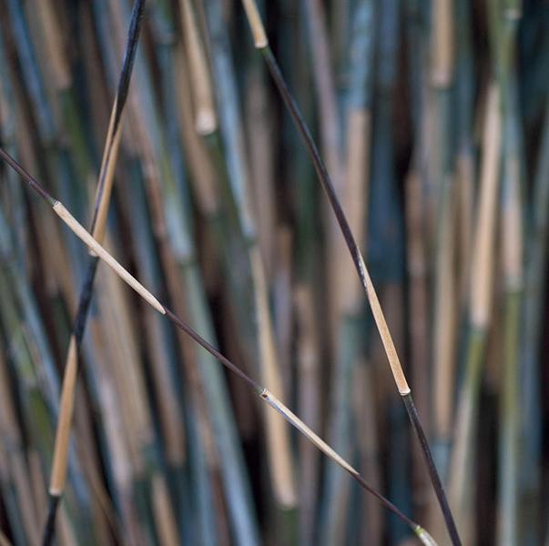 Bamboo - на 360.ru: цены, описание, характеристики, где купить в Москве.