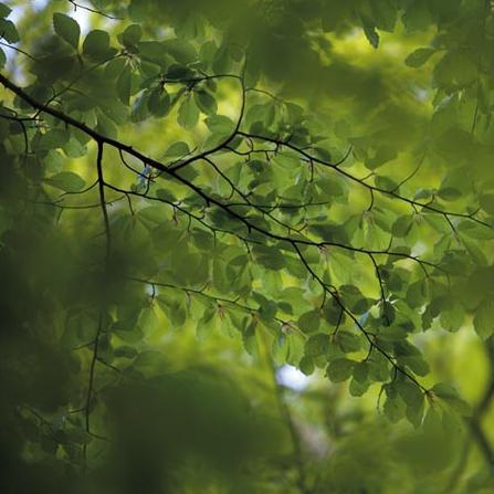 Green leaves - на 360.ru: цены, описание, характеристики, где купить в Москве.