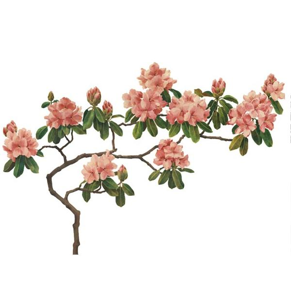 Pink blossom - на 360.ru: цены, описание, характеристики, где купить в Москве.