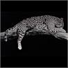Visionnaire Leopardo - на 360.ru: цены, описание, характеристики, где купить в Москве.