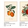 Ботаника - на 360.ru: цены, описание, характеристики, где купить в Москве.