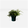 Cone vase - на 360.ru: цены, описание, характеристики, где купить в Москве.
